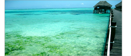 A picture of a beach and hotel jetty showing algae growing in the sea.