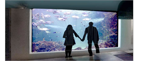 Couple stand in front of a large aquarium acrylic window